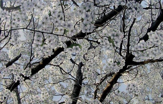 All'ombra di un ciliegio in fiore