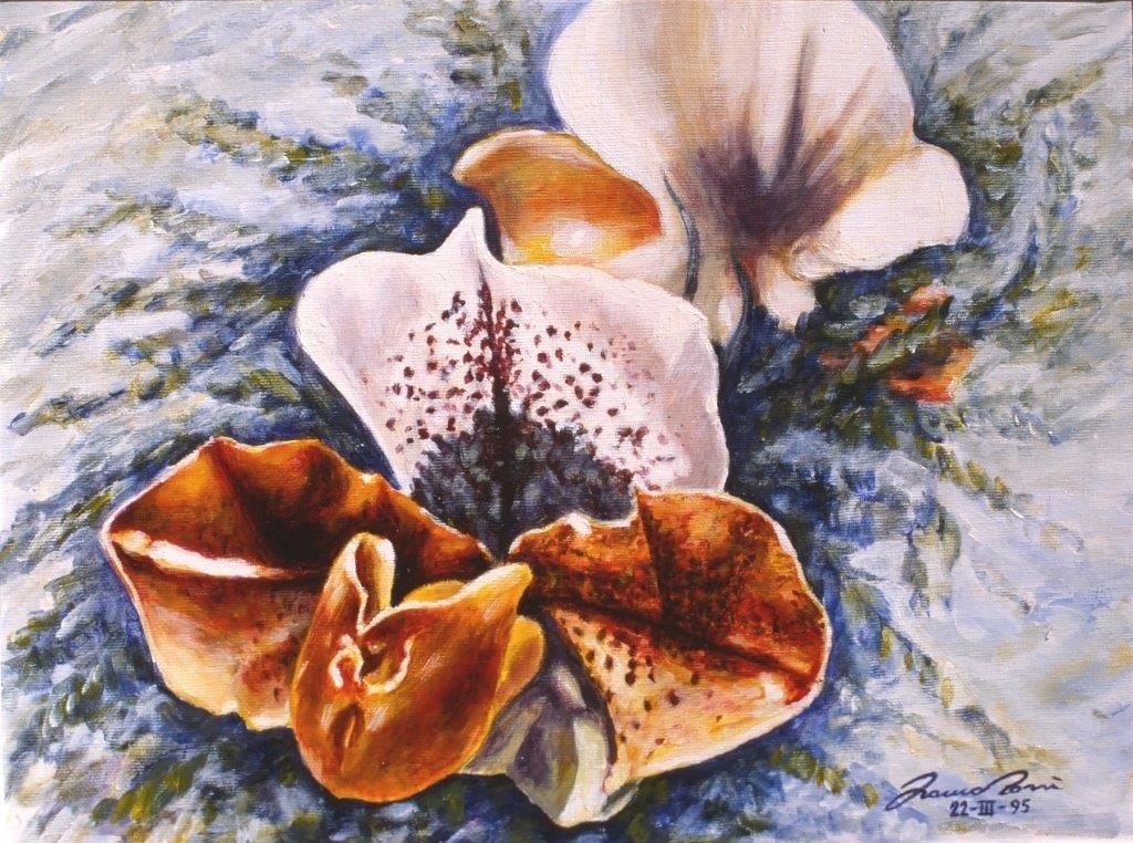Orchidee di S. Valentino 2